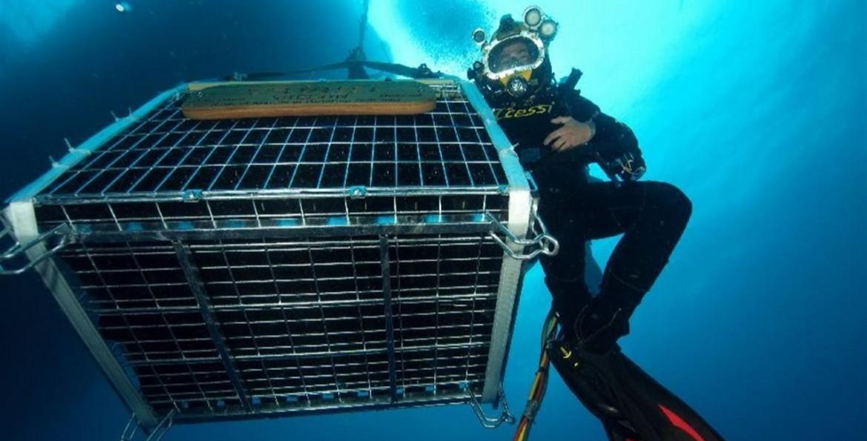 Jamin s.r.l. - Underwater Wine Cave Portofino