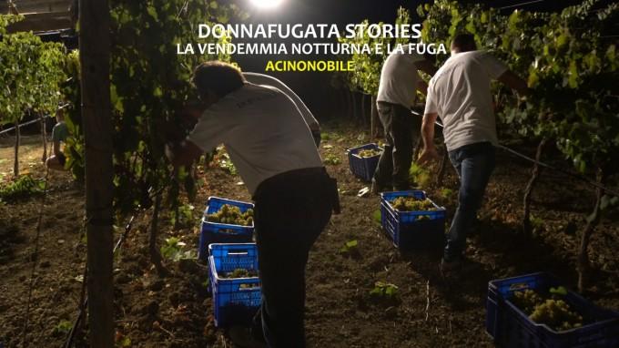 La vendemmia notturna | Donnafugata