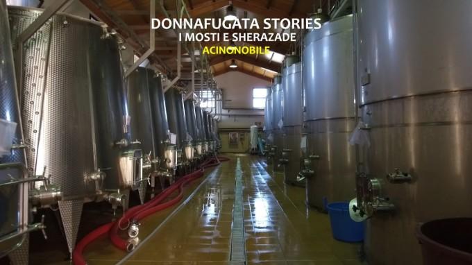 Mosti e Sherazade | Donnafugata