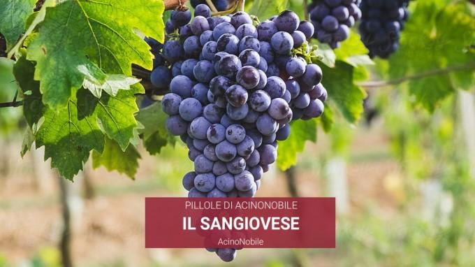 Il Sangiovese | AcinoNobile
