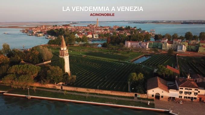 Venissa: la vendemmia a Venezia