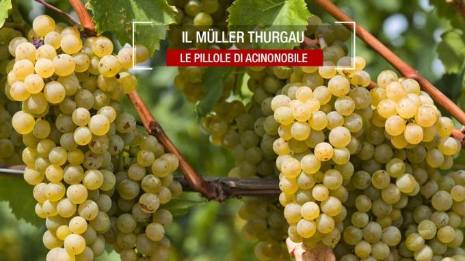 Il vitigno Müller-Thurgau