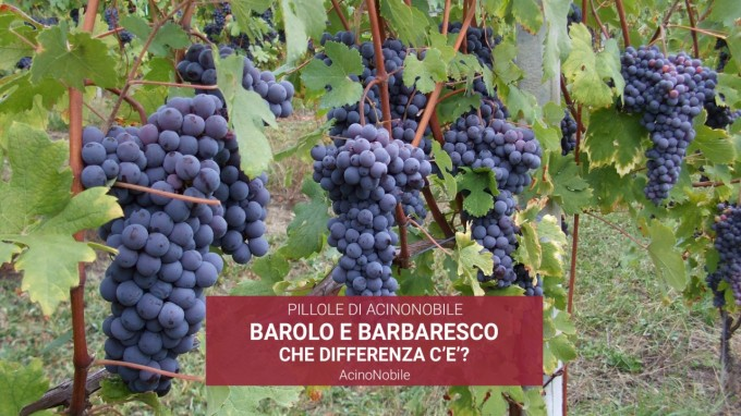 Che differenza c'è tra Barolo e Barbaresco?