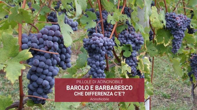 Che differenza c'è tra Barolo e Barbaresco?