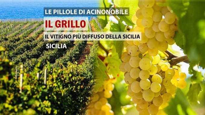 Il Vitigno Grillo