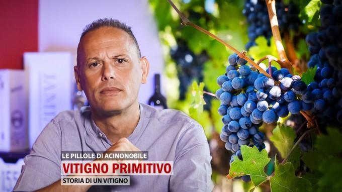 🍇Il Vitigno Primitivo
