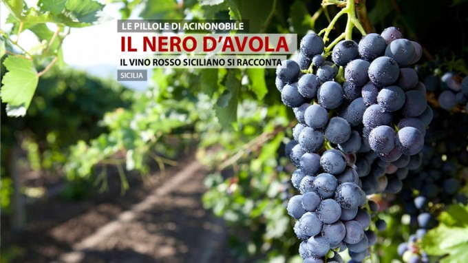 Il Nero d'avola | Vini e Vitigni di Sicilia