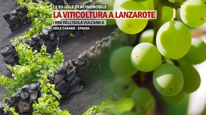 🍇La Viticoltura a Lanzarote