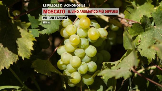 Vitigni famosi | Il Moscato | Il vino aromatico più diffuso