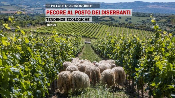 Tendenze ecologiche | Pecore al posto dei diserbanti nelle vigne