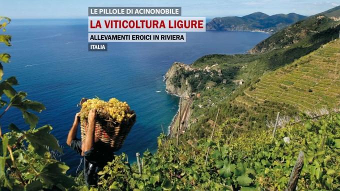La viticoltura Ligure | Un viaggio da levante a ponente per scoprire i prodotti della riviera