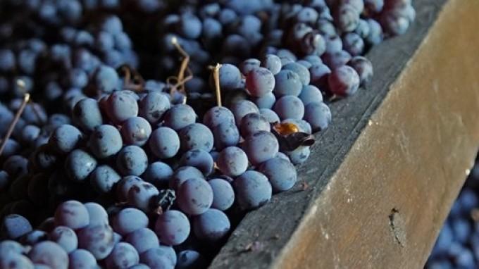 L'Amarone... Storia, origine e uvaggio del vino della Valpolicella