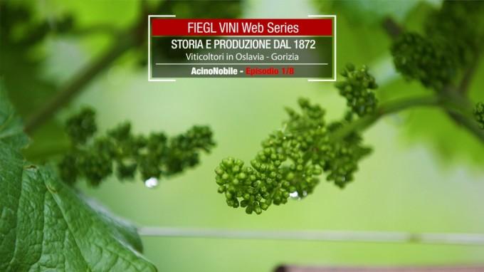 Fiegl Wines: In friuli tra confine e Collio