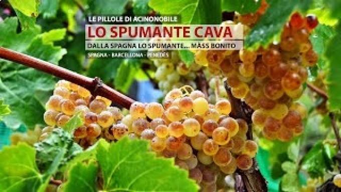 Il Cava | Lo Spumante di Spagna