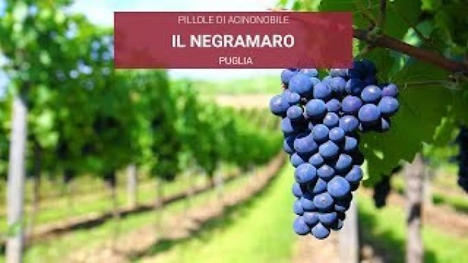 Negramaro | Vino e vitigno