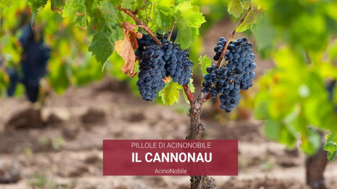 Il Cannonau | AcinoNobile