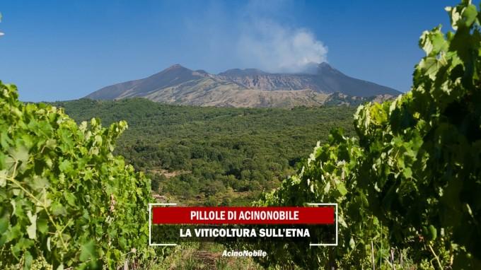 La Viticultura sull'Etna