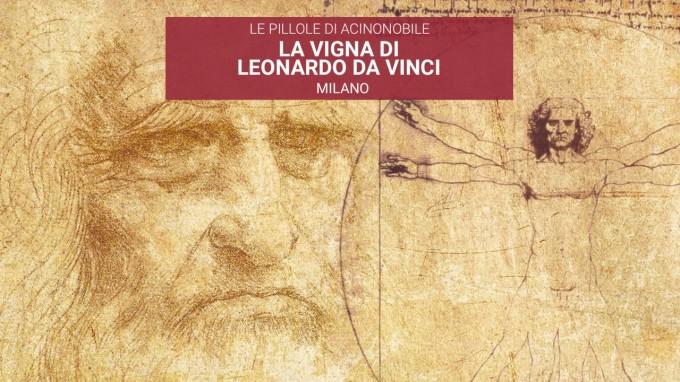 Che Vitigno Coltivava Leonardo da Vinci 500 anni fa a Milano?