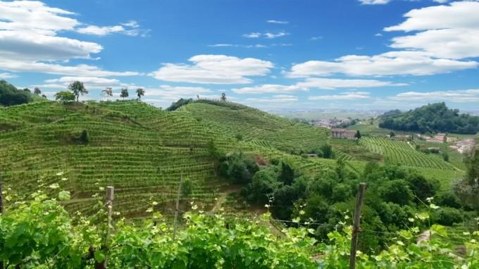 Adami Spumanti - L'Agricoltura Eroica sulle rive del Prosecco
